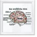 Das weibliche Hirn